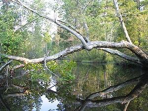 """""""Mullica River 2"""". Licensed under CC BY-SA 3.0 via Commons."""