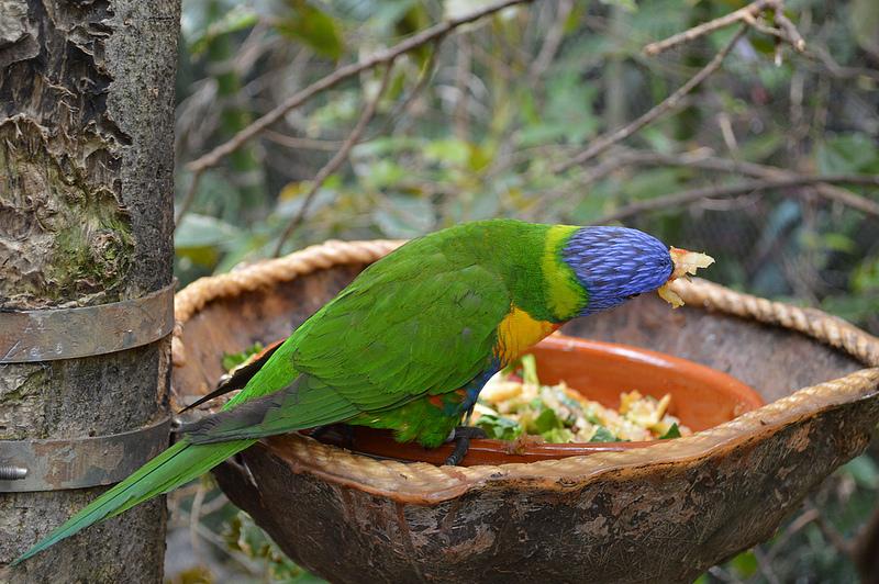 Bird Exclusion