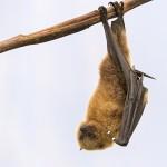 Bat Removal in Kouts