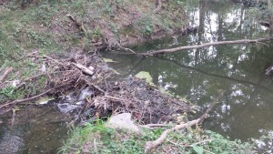 Beaver Removal in Edwardsville IL