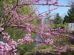 """Sayen Park (7058927789)"" by Eva and Rodney Hargis - IMG_2953Uploaded by gamweb. CC BY-SA 2.0 via Commons"