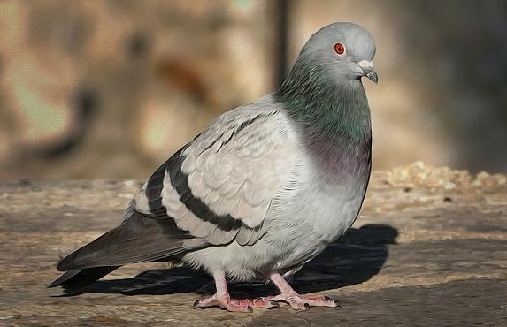 BIRD (12)